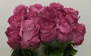 Цветы оптом и в розницу, букеты в г. Астана
